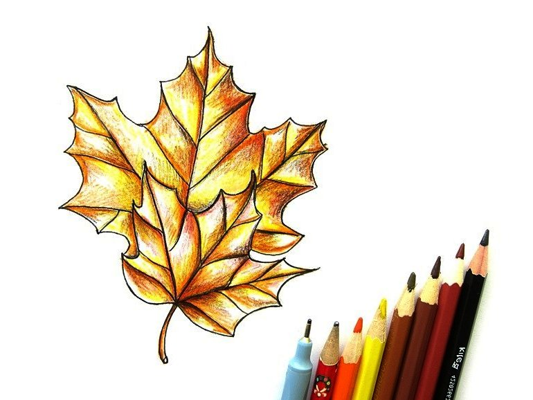 кленовый лист карандашом